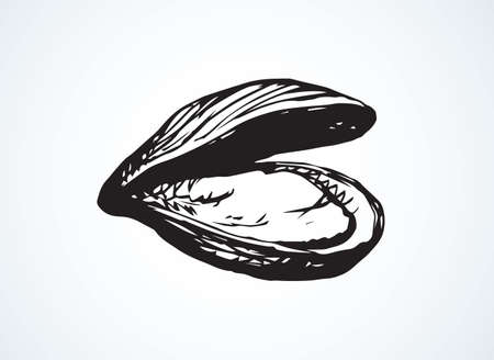 Big fresh perl Ostreidae mollusc on white backdrop. Outline black ink hand drawn.