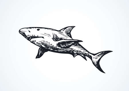 Giant gray Shark isolated on white backdrop. Freehand outline black ink hand drawn.