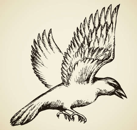 Big black crow in swings wings in flight. Vector monochrome freehand ink drawn background sketchy in scrawl ancient style pen on paper with space for text