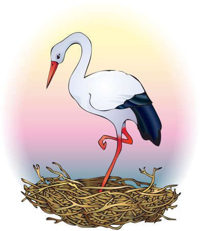 Vector Image. Elegant white stork stands in a nest at sunset