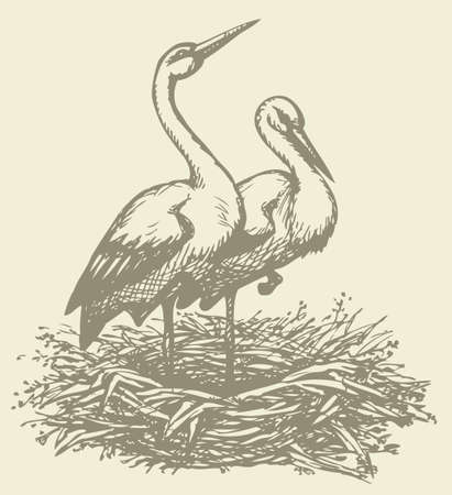Vector background with a graphic monochrome drawings of pairs of storks in the nest 向量圖像
