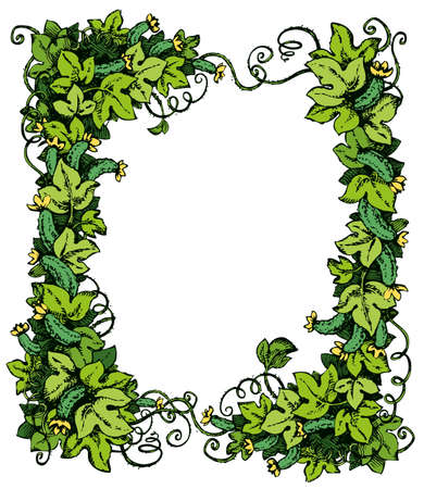 Cucurbitaceae family creeping on trellises with maturity eco fruitage, lush foliage, curled shoots. Bright color hand drawn picture sketch in art doodle style with space for text on white backdrop