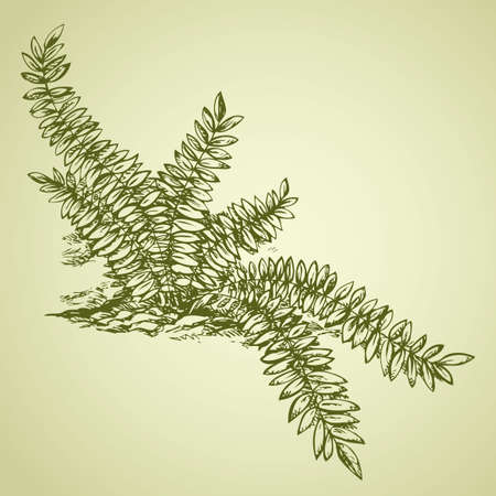 Juicy tropical fern spread germs near water source. Vector monochrome freehand linear ink drawn backdrop sketchy in art scribble antique style pen on paper with space for text on sky