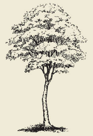 Cute big green deciduous tree with lush foliage. Vector monochrome freehand sketchy linear ink drawn backdrop in style pen on paper with space for text on sky