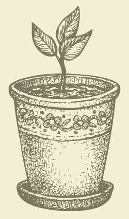 Vector monochrome drawing hatching. Sprout in a pot