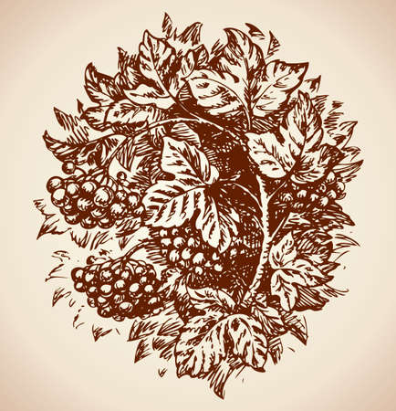 Autumn Sprigs with ripe round clusters tart sour viburnum folded oval vignette. Vector monochrome freehand linear ink drawn backdrop sketchy in art scribble antique style pen on paper with space for text on sky