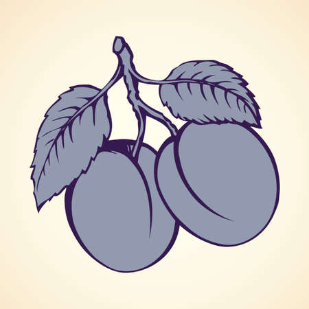 Tasty ripe raw fresh sappy Plums fruitful on tree sprig isolated on white backdrop. Freehand outline ink hand drawn picture sketchy in art doodle style pen on paper. View close-up with space for text
