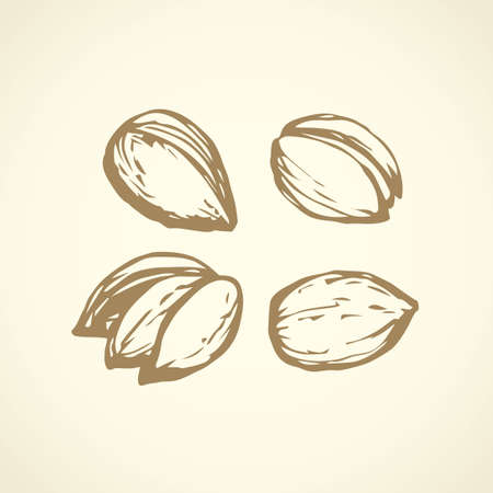 Big ripe raw dry tasty fat Pistacia vera pod isolated on white backdrop. Freehand outline ink hand drawn picture sign sketchy in art retro scribble style pen on paper. Closeup view with space for text