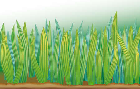 Vector organic green background. Field with growing green with longitudinal streaks on a white background 向量圖像