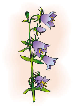 Vector drawing. Campanula is one of several genera in the family Campanulaceae with the common name bellflower. Çizim