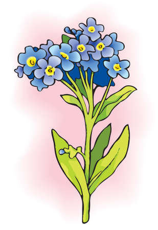 Vector drawing. Sprig of Myosotis. Flowering plants in the family Boraginaceae that are commonly called Forget-me-nots Stock Illustratie