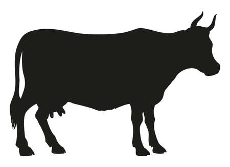 Young cow   isolated on white backdrop. Dark ink drawn background sketchy in art style pen on paper. Side view with space for text