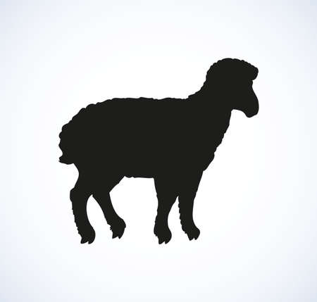 Little cute sheep standing in profile isolated on white background. Dark hand drawn picture sketch in art retro engraving style. Side view with space for text