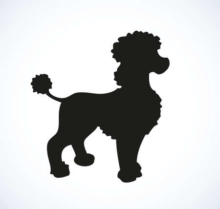 Shaggy Standard Poodle isolated on white background. Black ink hand drawn picture sketch in art retro doodle style pen on paper. Closeup side view with space for text