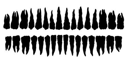 Clean adult oral mouth cuspid layout scheme element light text space backdrop. Outline black hand drawn people treat logo pictogram emblem diagram concept sketch. Retro art graphic line close up view