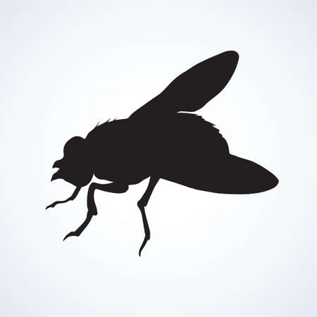 Musca domestica. Big hairy diptera warble hum horsefly on light sky backdrop. Dark ink hand drawn picture in art retro print style. Close up view with space for text