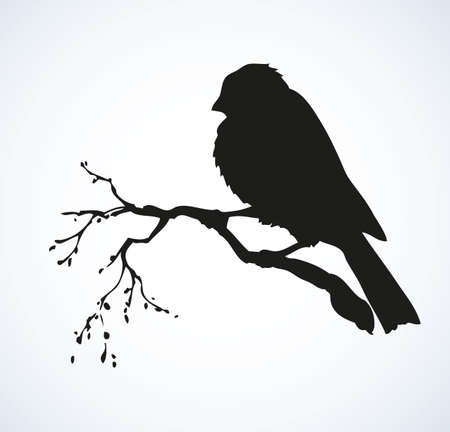 Tit, Paridae family isolated on white backdrop. Black ink hand drawn   sketchy in retro engraving style. Closeup view with space for text