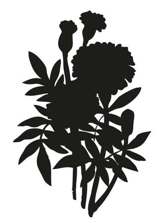 African Tagetes isolated on white background. Monochrome black ink drawn picture sketchy in art engraving retro style pen on paper. Closeup view with space for text