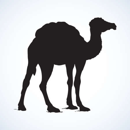 Camel isolated on white background. Black ink hand drawn image in retro style. Side view with space for text