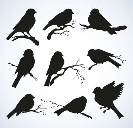 Tits, chickadees, sparrows, bullfinches and titmice. sparrow family on white backdrop. Black ink hand drawn logotype emblem pictogram in retro engraving style. ЛОГОТИПЫ