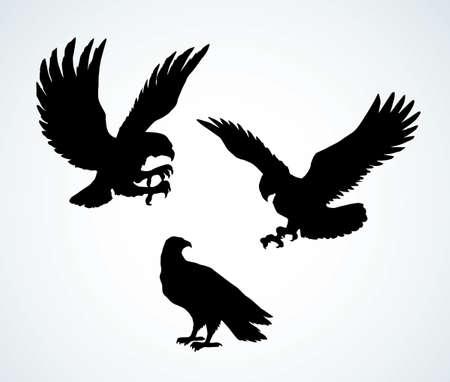 Big pride Hieraaetus accipitrine fly on light sky background. Dark ink hand drawn