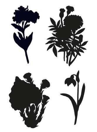 Golden African Daisy, primroses groundsel, Scorpion Grasses Boraginaceae, Amaryllidaceae Herbaceous bush isolated on white background.