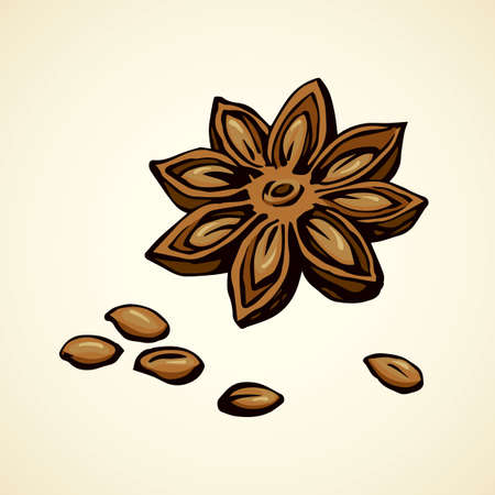 Indian badiam anice pod of licorice fennel anis bunch on white backdrop. Vibrant brown color hand drawn anicestar corn logo sketchy in retro art doodle style. Macro staranise view with space for text Logo