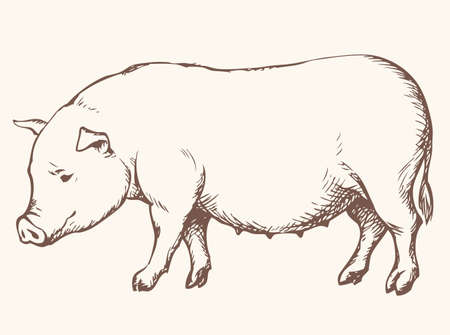 Young fat pig with a brush on the tail standing forage on pasture farm. Vector monochrome freehand ink drawn background sketchy in art scribble style pen on paper. Side view with space for text Stock fotó - 157834419