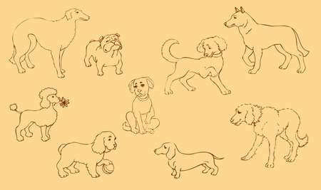 Vector outline drawing. Different set of purebred dogs and mongrels 矢量图像