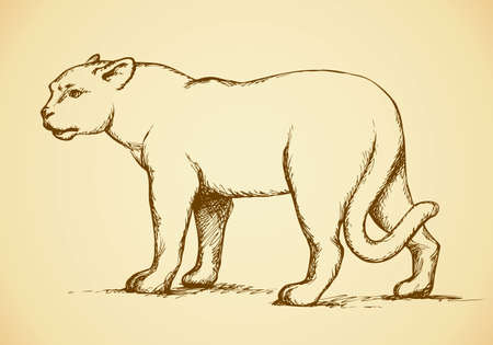 Anxiously waving tail, powerful young lioness standing and looking to the side. Vector monochrome freehand ink drawn background sketchy in art scribble antiquity style pen on paper with space for text