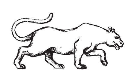 Anxiously powerful pretty young big alert leo sneak fierce looking for prey isolated on white. Freehand outline black ink hand drawn picture sketchy in art scribble cartoon graphic style pen on paper 矢量图像