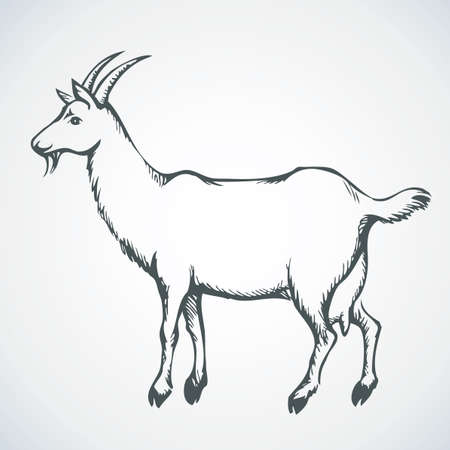 Cute young milch goat on pasture farm. Vector monochrome freehand ink drawn background sketchy in art scribble antique style pen on paper with space for text