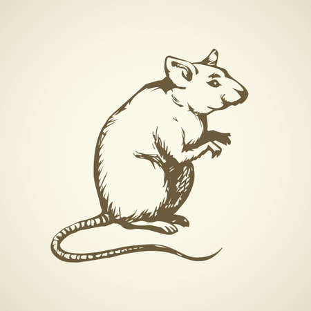 Furry Rattus on light backdrop. Freehand dark ink hand drawn   sketchy in retro scribble style pen on paper. View closeup with space for text