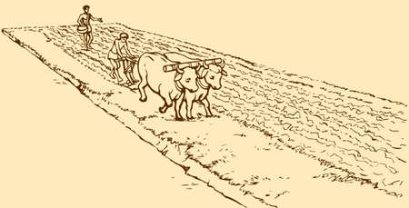 Vector picture. Primitive agriculture ancient Asian and African world: Egypt, Assyria, Babylon, India, China. One farmer plows the land plot pulled on a pair of oxen. Second sows grain plowed field Иллюстрация