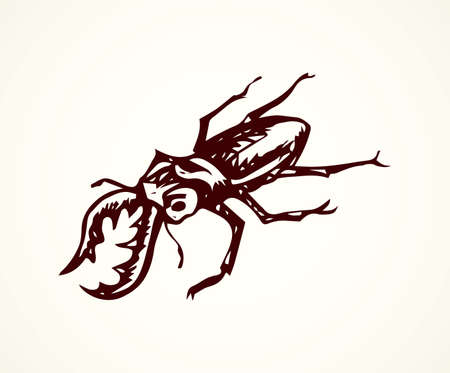 Big cute crawly lucanid stagbeetle on light backdrop. Freehand dark outline ink hand drawn insects emblem sketchy in retro art doodle etch style pen on paper space for text. Close up detail view