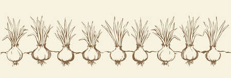 Ripe eco raw fresh green bulb leek fruit isolated on white sky backdrop. Freehand line black ink hand drawn botany spice farmer border sketch in vintage art doodle cartoon style with space for text 向量圖像