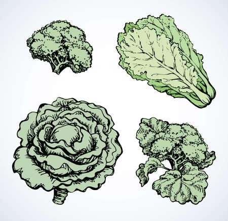 Ripe raw fresh Brassica oleracea collard brocolli head sign. Dieting dinner.