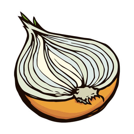 Ripen eco raw fresh common golden bulb leek fruitful icon isolated on white backdrop. Freehand vibrant color hand drawn symbol sign sketchy in art scribble style. Closeup view with space for text 向量圖像