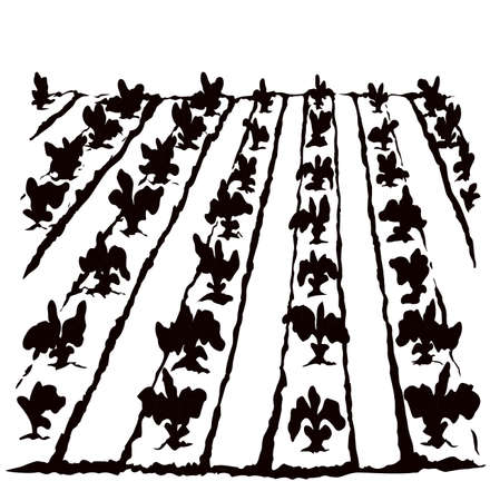 Eco early lush raw soy bush flora culture sow on tillage furrow mulch patch isolated on white background. Line ink hand drawn yield scene sketch in retro doodle silhouette style with space for text