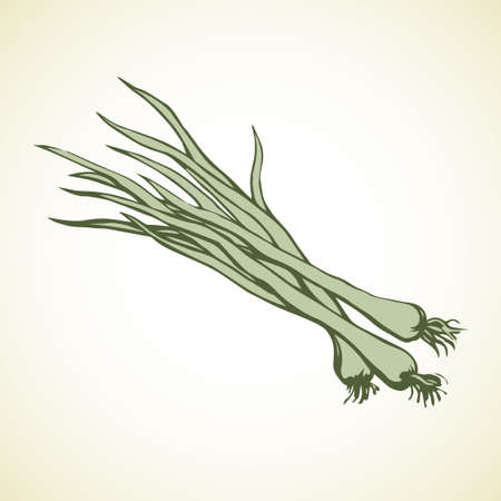 Ripe eco raw fresh bio leek bulb bundle icon isolated on white backdrop. Freehand outline ink hand drawn object sign sketchy in art doodle cartoon style pen on paper. Closeup view with space for text