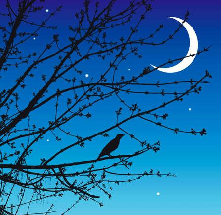 The beautiful singing of the nightingale warm spring night