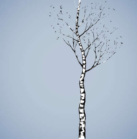 Tall Birch Tree. Romantic outdoor wintertime scenery view and space for text on evening sky. Illustration