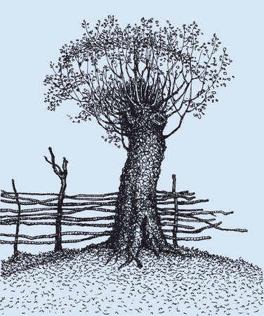 Vector drawing. In the old tree near the fence have grown new branches Vektorgrafik
