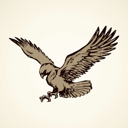 Big pride Hieraaetus accipitrine fly on white sky background. Freehand line brown ink hand drawn  emblem sketchy in art vintage scribble graphic style pen on paper. Closeup view and space for text