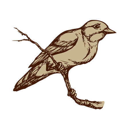 Spotted Flycatcher isolated on white background. Freehand outline ink hand drawn image sketchy in art scribble retro style pen on paper. Closeup side view with space for text 向量圖像