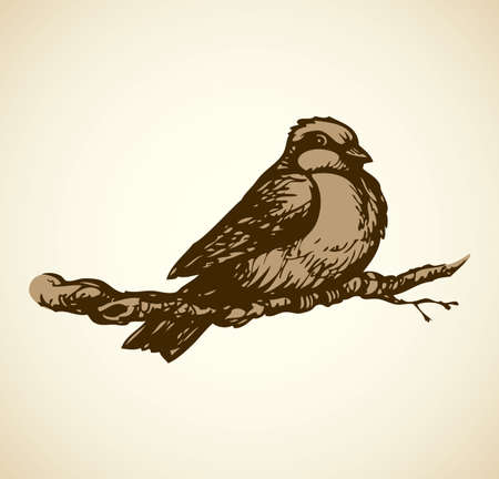 Tit isolated on white backdrop. Monochrome freehand outline ink hand drawn picture sketchy in retro doodle engraving style. Closeup side view with space for text