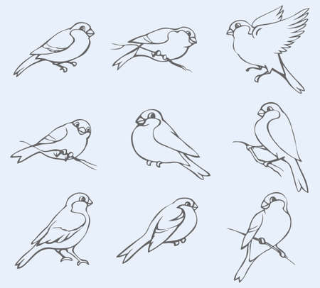 Vector monochrome hand-drawn outline image. Set of different poses little tits and bullfinches 向量圖像
