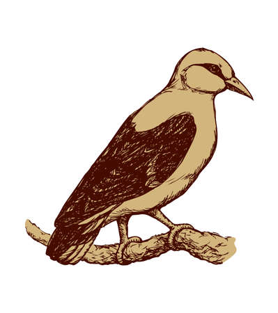 Eurasian Golden Oriole isolated on white background. Freehand outline ink hand drawn image sketchy in art scribble retro style pen on paper. Closeup side view with space for text Illustration