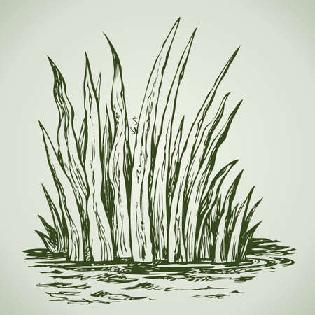 Abstract herb. Summer juicy fresh thick grass. Vector monochrome freehand linear ink drawn backdrop sketchy in art scribble antique style pen on paper with space for text on sky  イラスト・ベクター素材