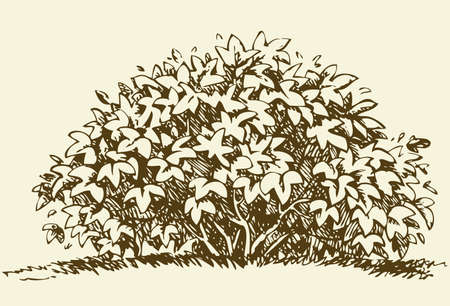 Cute big green deciduous bush with lush foliage. Vector monochrome freehand sketchy linear ink drawn backdrop in style pen on paper with space for text on sky Vektorgrafik